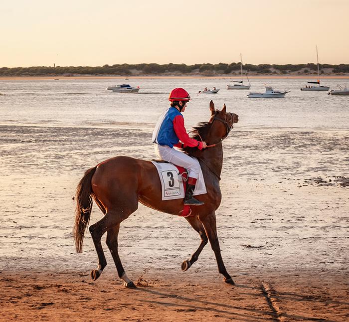 horse racing picks racehorse racing